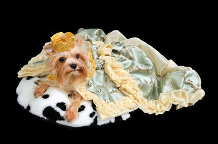 pampered pets: Royal dog wearing crown and luxurious green dress
