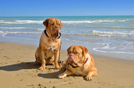 Two dogs the beach on summer day Stock Photo - 11550553