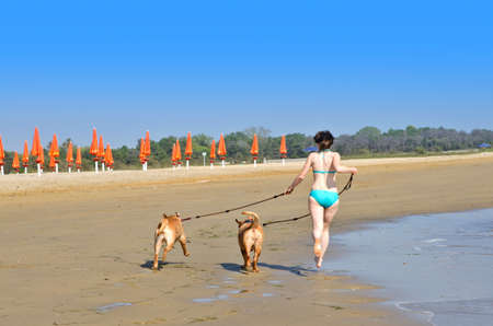 dogue de bordeaux: Young woman with two dogs running on the beach
