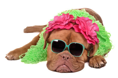 Lady dog wearing glasses, boa and barrettes