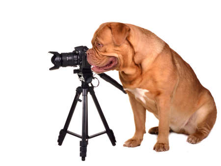 Dog photographer with camera placed on tripod Stock Photo