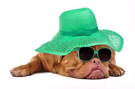 grappige honden: Grappige hond met hoed en een bril, op een witte achtergrond Stockfoto