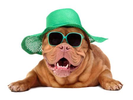 Dog wearing green straw hat and sun glasses, isolated photo