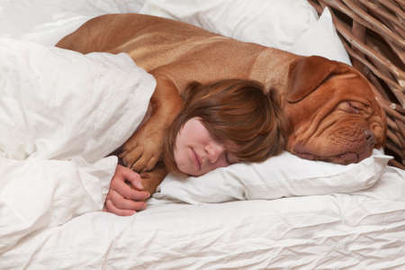 dogue de bordeaux: Girl and her dog comfortably sleeping in the bed