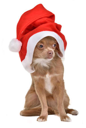 Santa Claus Dog photo