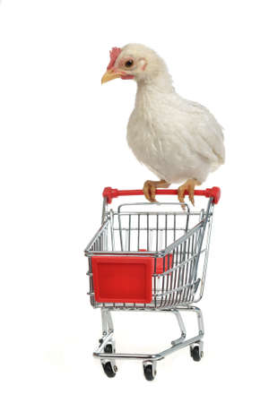 Chicken with shopping cart, against white background photo