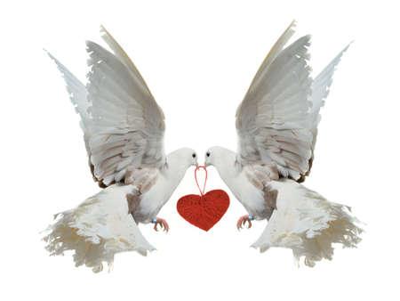 beaks: Due colombe bianche che tengono cuore rosso con il becco, isolato Archivio Fotografico