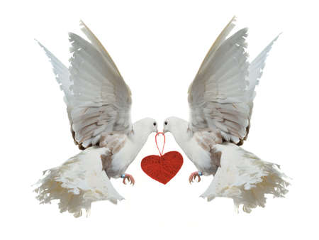Two white doves holding red heart with their beaks, isolated photo