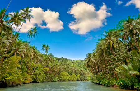 Tropical river with palm trees on both shores photo