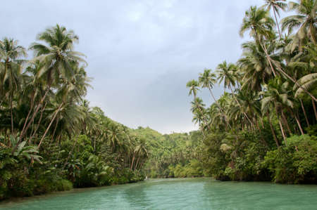 rain forest: Large tropical river with palm trees on both shores Stock Photo