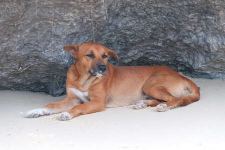 Dog lying in the sand in front of a cliff photo