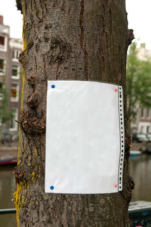 Blank paper leaf nailed to the tree - add your announcement here photo
