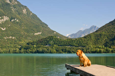 Lonely dog at the pier against mountains background, Italy photo