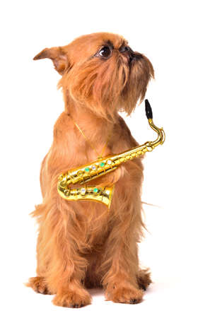 brussels griffon: Dog with Saxophone, studio shot Stock Photo