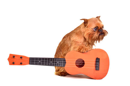 Guitarist dog, isolated on white background Stock Photo - 11693838