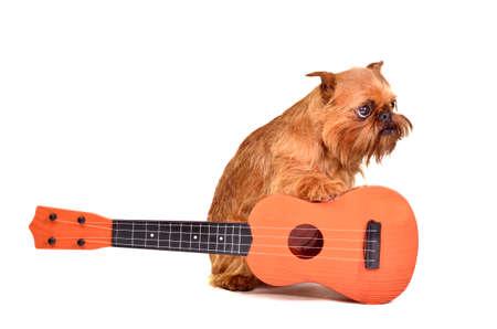 dog rock: Guitarist dog, isolated on white background