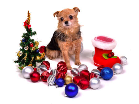 Christmas puppy with colorful decorations, isolated on white background Stock Photo - 11693849