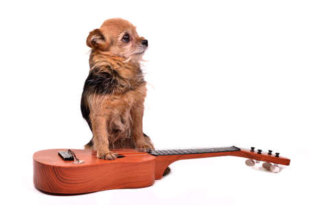 Dog with guitar against white background