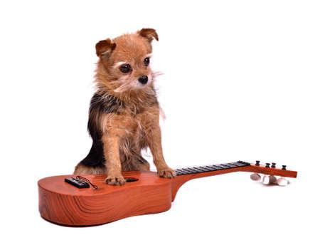 Guitarist dog, isolated on white background photo