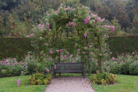 Single bank in de gerden onder Bush van roze rozen Stockfoto