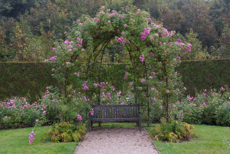 Single bench in the gerden under bush of pink roses