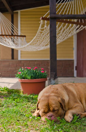 guard house: Garden house, hammock and sleeping dog in summer sunny day