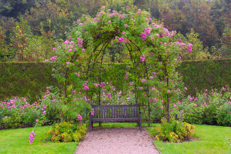 Beautiful peaceful garden with a bench surrounded by pink roses and greenery