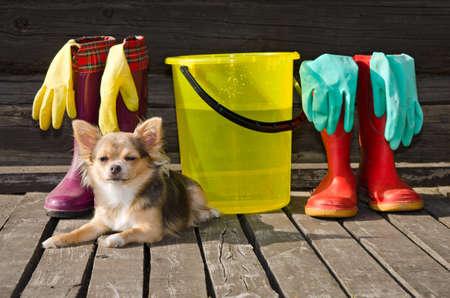 desinfectante: Pequeño perro tumbado en el porche soleado cerca de objetos para la limpieza y botas de goma.