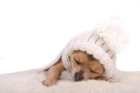 Newborn puppy sleeping lying on white fluffy fur, isolated on white background