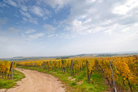 wine road: A country road in a vineyard field, Germany