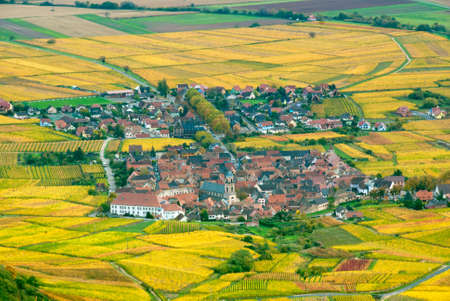 Small village in the middle of autumn vineyards, Alsace photo