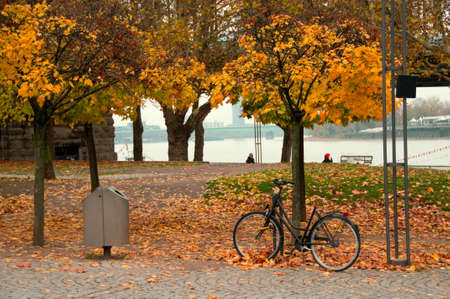 treed: Bike left on a tree in a beautiful autumn scenery.