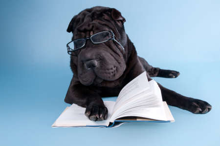 Sharpei dog is dreaming over a book photo