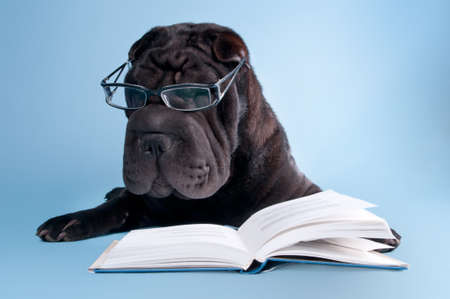 Black shar-pei dog with glasses is reading a book