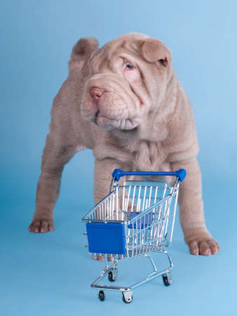 Adorable sharpei puppy with empty shopping cart isolated photo