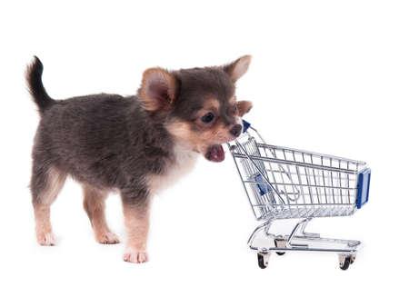 Chiot chihuahua mordre un panier d'achat Banque d'images