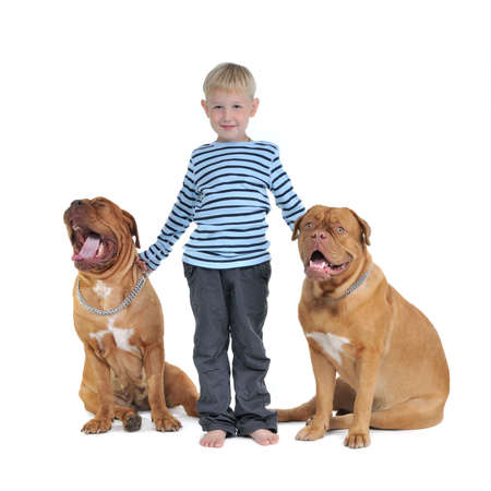 mastiff: Boy with his dogs isolated on white