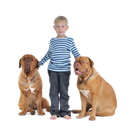 Total safety concept - boy with dogs isolated photo