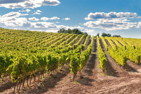 Vineyard and hills, Catalonia, Spain Stock Photo - 12074494