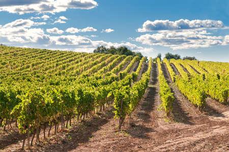 Wijngaard en heuvels, Catalonië, Spanje Stockfoto