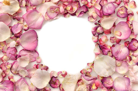 Frame made of pink rose petals on white photo