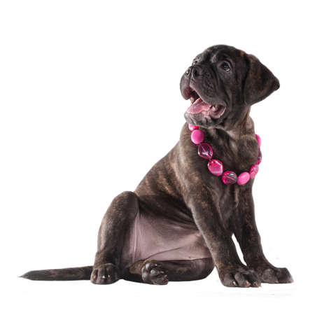 Cute puppy with pink beads looking up photo