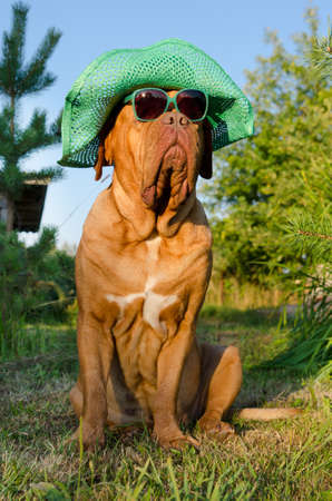 Dog with hat and glasses sitting in the garden photo