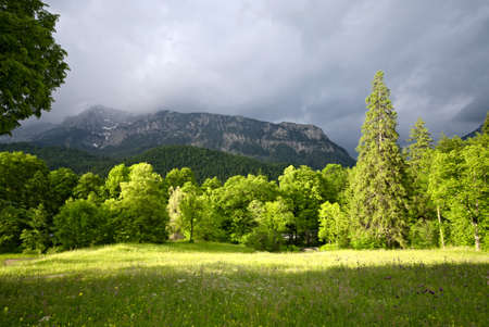 Green field with forest and mountains in the Alps, Bavaria, Germany photo