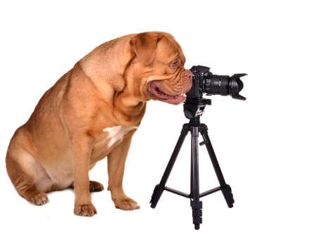 Photographer with photo camera, isolated on white photo