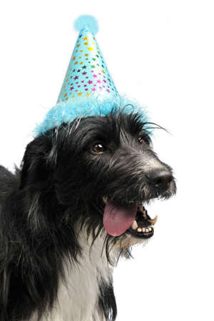 Dog wearing party cone, isolated photo