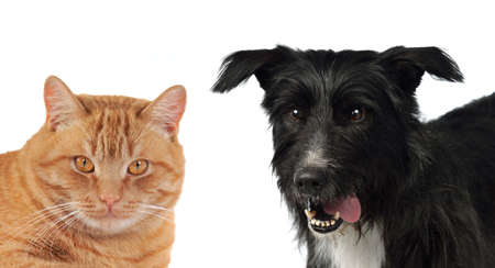 cur: Cat and dog isolated on white background Stock Photo