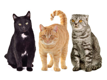 Three cats together against white background