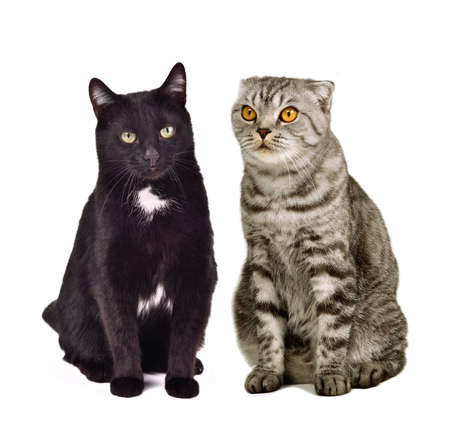 Two cats sitting, isolated on white background photo