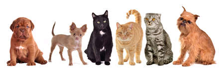 Group of cats and dogs, isolated on white background photo